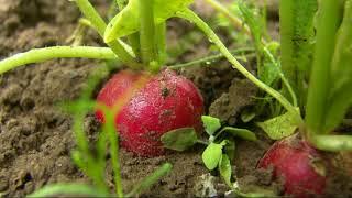 Несколько полезных советов, или ответы на вопросы садоводов