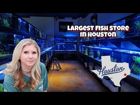 *LARGEST* FISH STORE In HOUSTON! New Corals!