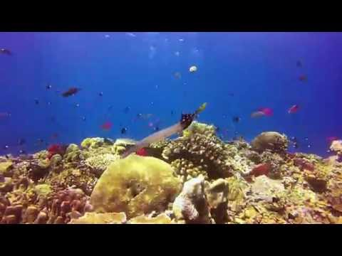 Fiji: Rainbow Reef, Volume1