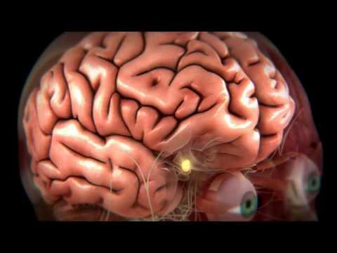 нормативным требованиям человеческий мозг и его возможности фильм рассматривается