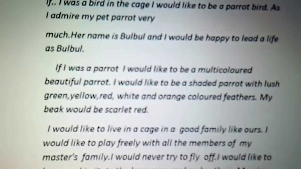 Essay If I Was A Bird In A Cage Youtube