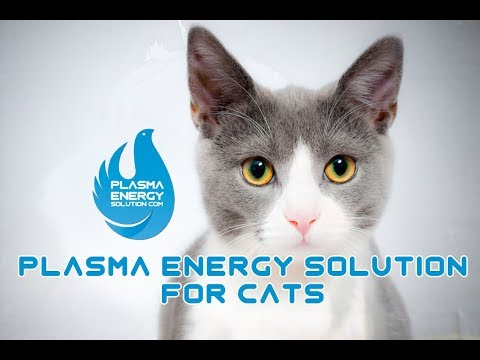 Plasma Energy Solution For Cats