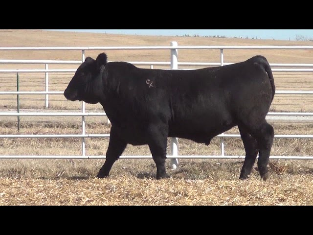 Express Ranches Lot 401