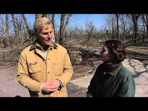Managing Ice Damage on Trees