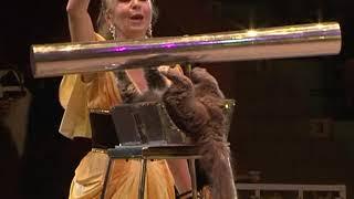 Премьера новой программы в Курском цирке прошла с аншлагом