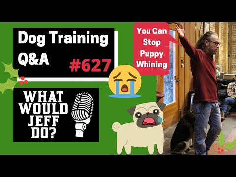 dog-training---dog-reactivity---stop-puppy-whining---what-would-jeff-do?-q&a-ep.627-(2019)