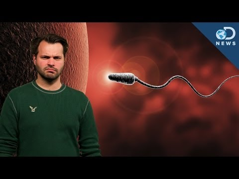 How You're Destroying Your Sperm!