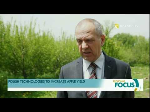 In Kazakhstan, apples will be grown according to Polish technology