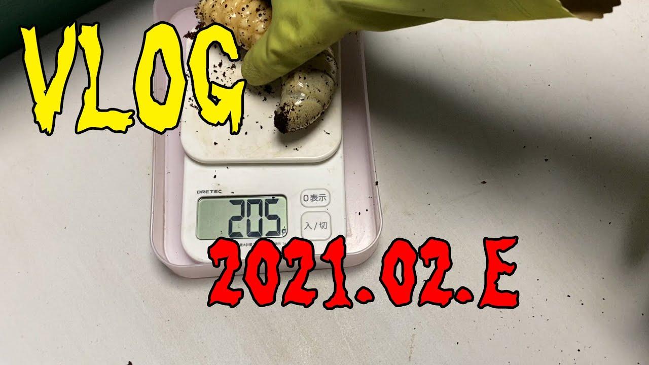 VLOG 2021 02 E