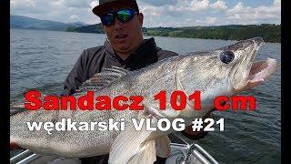 Sandacz 101 cm! Jezioro Rożnowskie, polowanie na suma i KONKURS - wędkarski VLOG #21