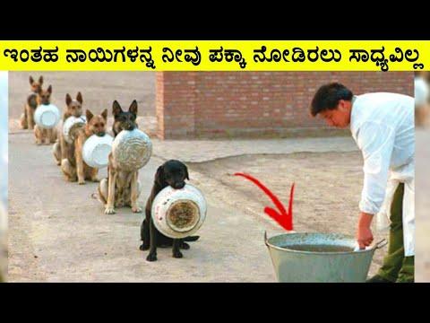 ಇಂತಹ ನಾಯಿಗಳನ್ನ ನೀವು ನೋಡಿದ್ದೀರಾ ? ಪಕ್ಕಾ ನೋಡಿರಲು ಸಾಧ್ಯವಿಲ್ಲ ! || BEST TRAINED DISCIPLINED DOGS