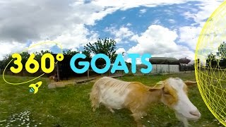 Meet the Goats in Spitalfields City Farm | 360 Degrees for Kids