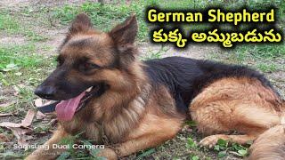 German Sheph…