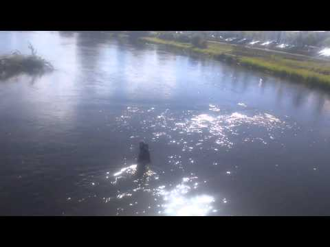 Old man go in river moy to fish and can't get out
