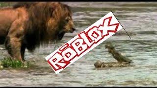 Roblox Wild Africa - Lions .-.