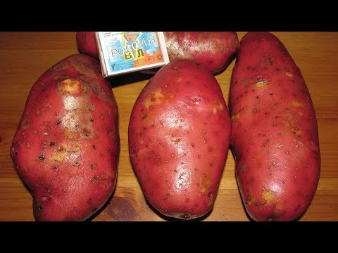 Вопрос: Как нельзя хранить картофель?