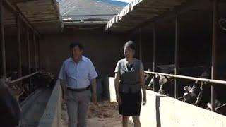 Құтыби ауданы Мал бордақылау әдісі видео
