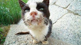 YouTubeの収益の一部を撮影で関わった動物愛護団体や個人の保護猫ボランティアさんに寄付しています。 チャンネル登録お願いします!