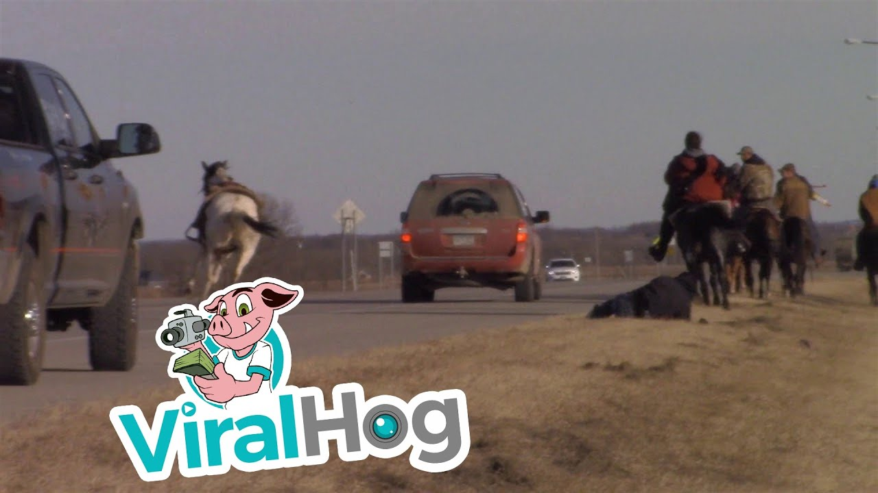 Funny Video: Horse Tosses Rider On The Highway