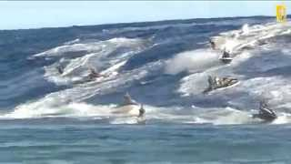 Code Red 2013 Teahupoo Tahiti Surf Madness!!!