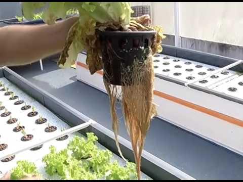 Ecocidade | Aquaponia