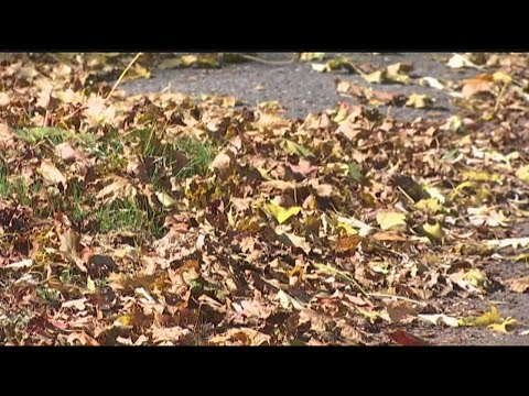 Importance of cleaning up your leaf filled yard