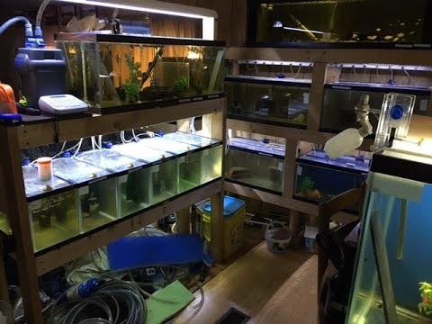 Hobbyist Fish Room Tours Over 40 Fish Tanks YouTube