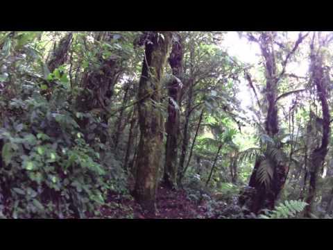 Costa Rica Monteverde Cloud Forest Hike Sendero Wilford Guidon Part 1 at LeaningTraveler.com