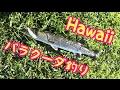 続・ワイキキ市街地でバラクーダを狙う!アラワイ運河でおかっぱり[ハワイ旅行で釣り]