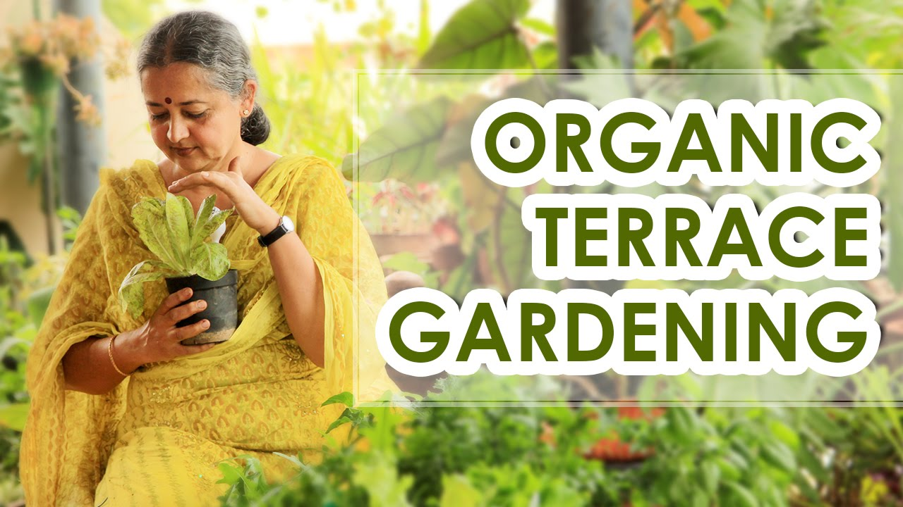Organic terrace garden the new fitness mantra youtube for Terrace vegetable garden by harikumar