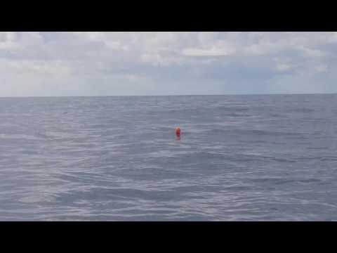 Big Shark Hundreds of Meters off Cronulla Beach
