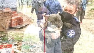 Pseudohodowla śmierci, w której znaleźliśmy ponad 120 martwych psów!! ( uwaga DRASTYCZNY FILM!! )