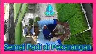 Download lagu Menyemai Padi di Pekarangan ( Halaman Rumah )