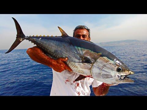 Amazing Bluefin Tuna Fishing in Lebanon - YouTube