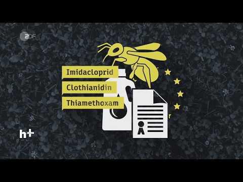 Bienensterben: Sind diese Gifte schuld? - heuteplus | ZDF