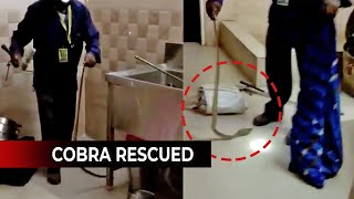 How a Cobra was rescued from kitchen of Gopabandhu Academy in Bhubaneswar