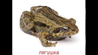 01 Карточки Домана на русском языке: Животные