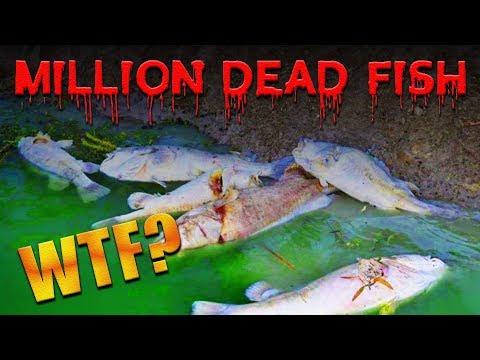 A Million Dead Fish!? ONE MILLION!?