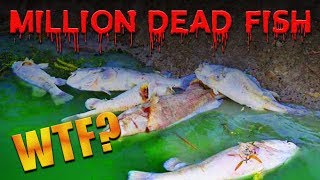 A Million Dead Fish!? ONE MILLION!?