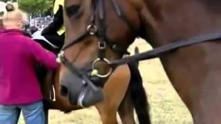 Ужасы конного спорта(, 2013-06-12T20:47:56.000Z)