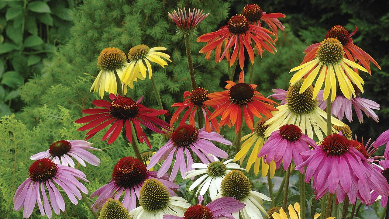 Planting And Growing Perennials Youtube