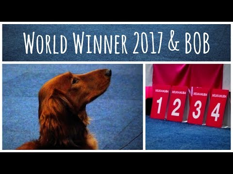 World Dog Show 2017 | BOB Standard Dachshund long-haired