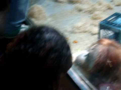Zoo Roma: orari, biglietti e info sul Bio Parco | Il ...
