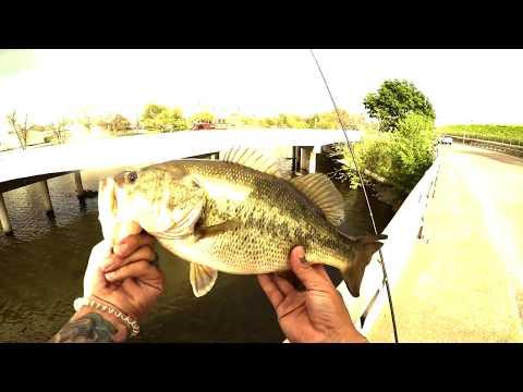 Fishing For Bass @White Rock And Lake Bachman