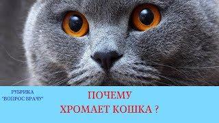 16.03.18 Почему хромает кошка?