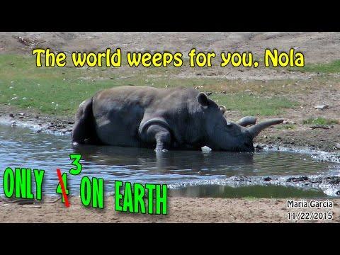 2 Northern White Rhinos in Entire Planet | Urgent Extinction Awareness