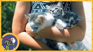 Отдаем котят в добрые руки