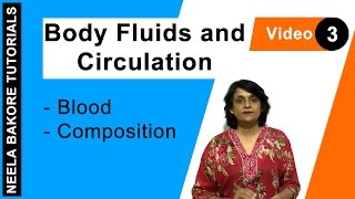 Body Fluids and Circulation - Blood - Composition
