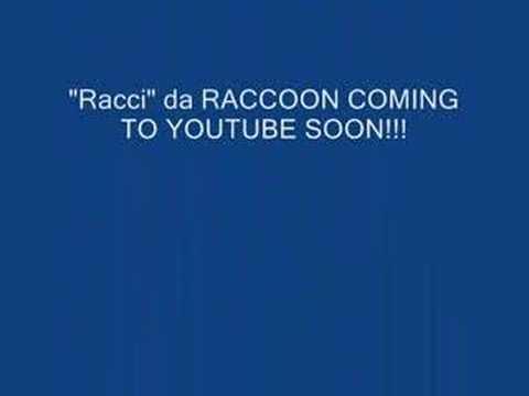 """""""Racci""""da Raccoon"""