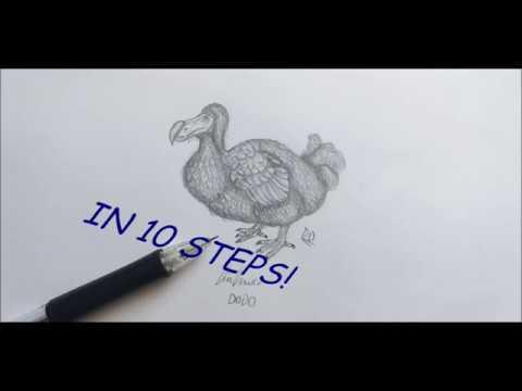Jak Narysować DODO W 10 Krokach. How To Draw DODO In 10 Steps.